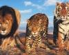 В Дубае откроется новый грандиозный зоопарк