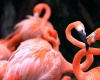 Из зоопарка в США пытались украсть фламинго