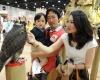 Абу-Даби открывает Международную выставку охоты