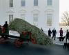 Первая леди США приветствует Рождественскую елку для Белого дома