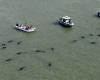 Во Флориде десятки китов выбросились на берег