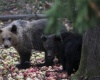 Семейную пару борщ спас от медведя-людоеда