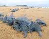 Голодные медузы захватили пляж