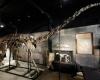На британском аукционе продан редкий скелет динозавра за $ 650 000