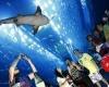 Аквапарк в ОАЭ - популярное место отдыха местных жителей и туристов