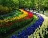 Голландский парк Кёкенхоф откроется 21 марта