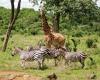 На сафари в Африку!